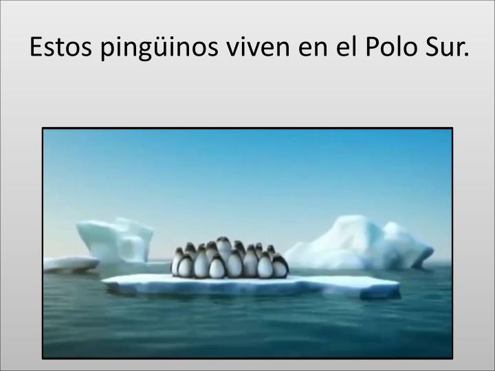 Estos ping inos viven en el polo sur