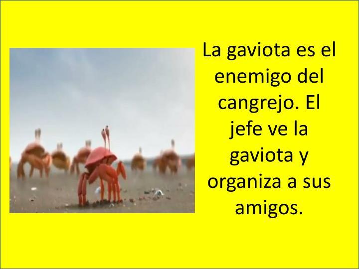 La gaviota es el enemigo del cangrejo. El jefe ve