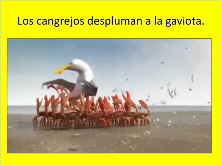Los cangrejos despluman a la gaviota.