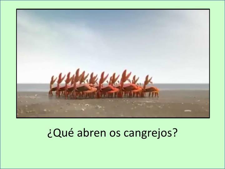 ¿Qué abren os cangrejos?