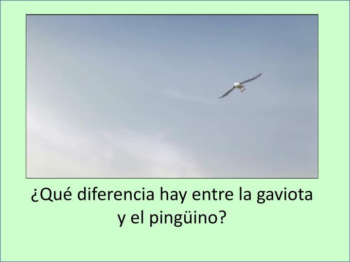 ¿Qué diferencia hay entre la gaviota