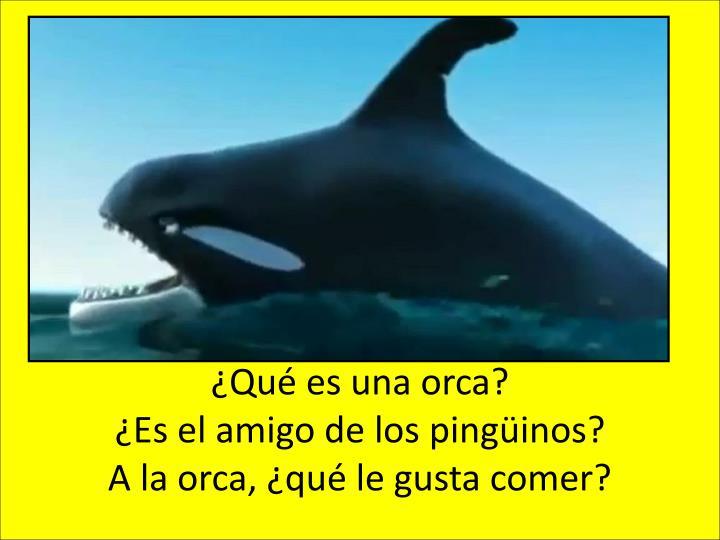 ¿Qué es una orca?