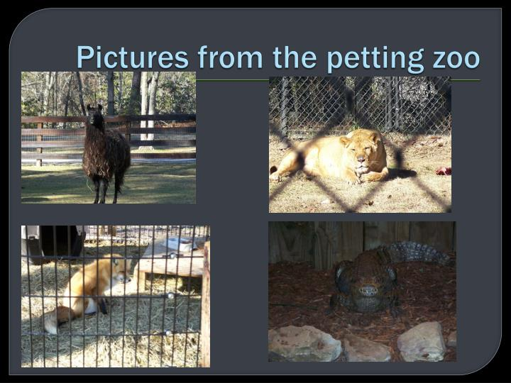 Pictures from the petting zoo