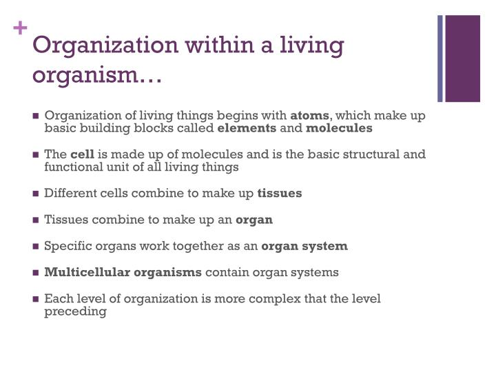 Organization within a living organism…