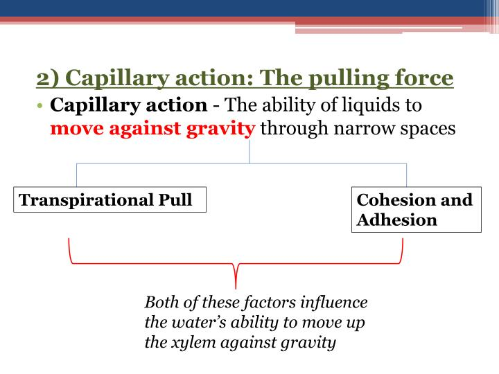 2) Capillary action: The pulling force