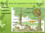 energy roles of organisms in an ecosystem
