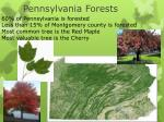 pennsylvania forests