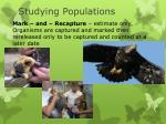 studying populations2