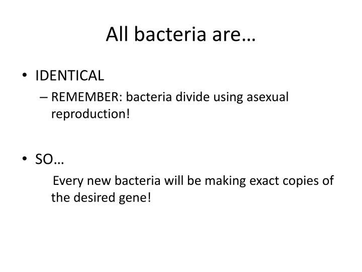All bacteria are…