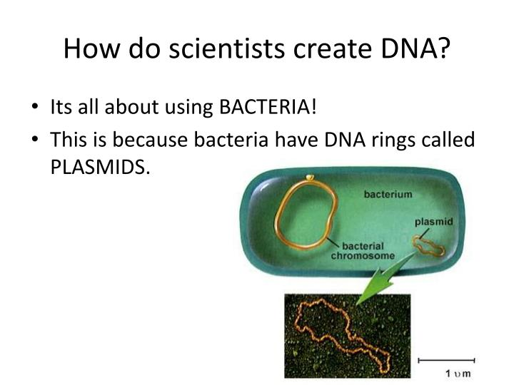 How do scientists create DNA?