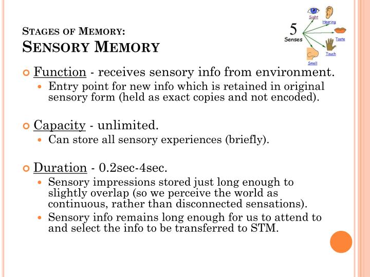 Stages of Memory: