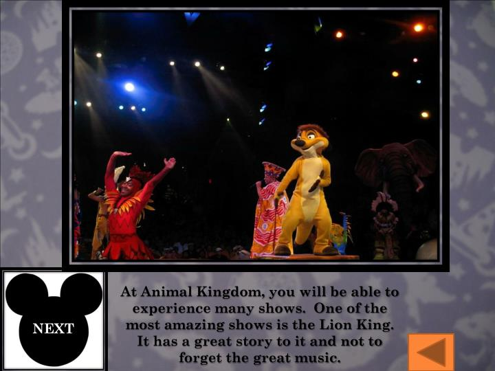 At Animal Kingdom, you will be able to experience many shows.  One of the most amazing shows is the Lion King.  It has a great story to it and not to forget the great music.