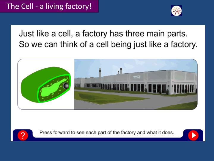 The Cell - a living factory!