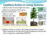 capillary action in living systems