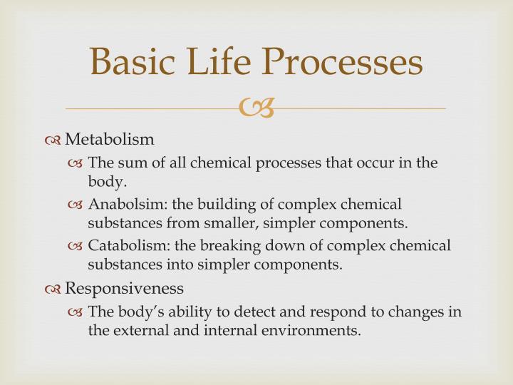 Basic life processes