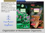 organization of multicellular organisms
