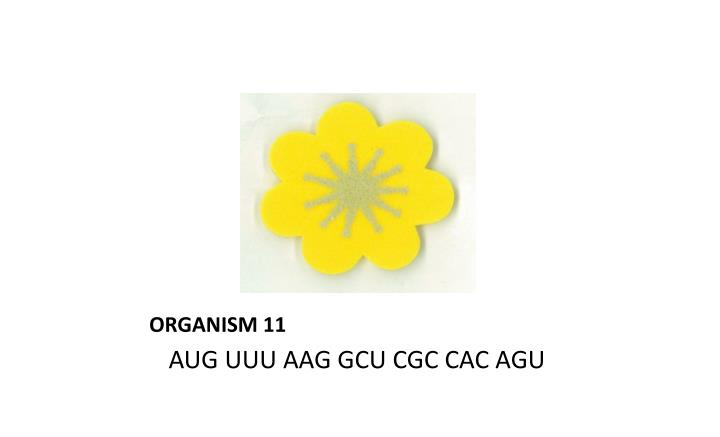 ORGANISM 11