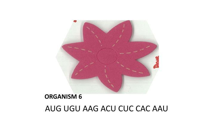 ORGANISM 6