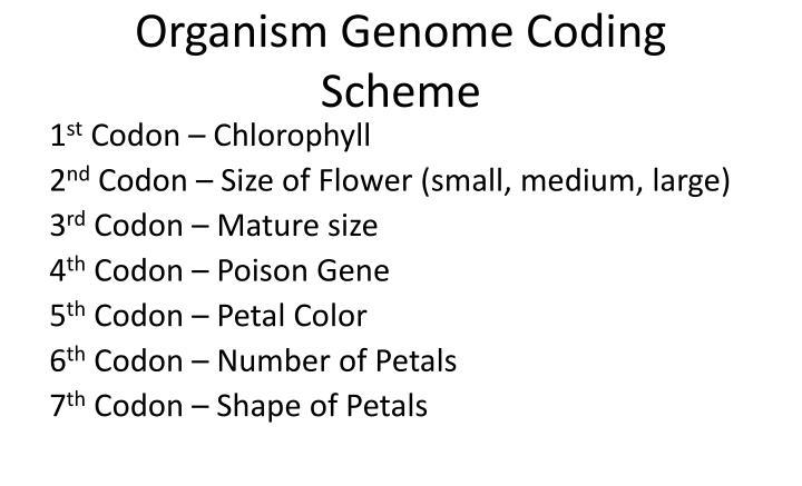 Organism genome coding scheme