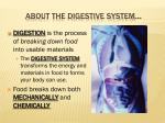about the digestive system