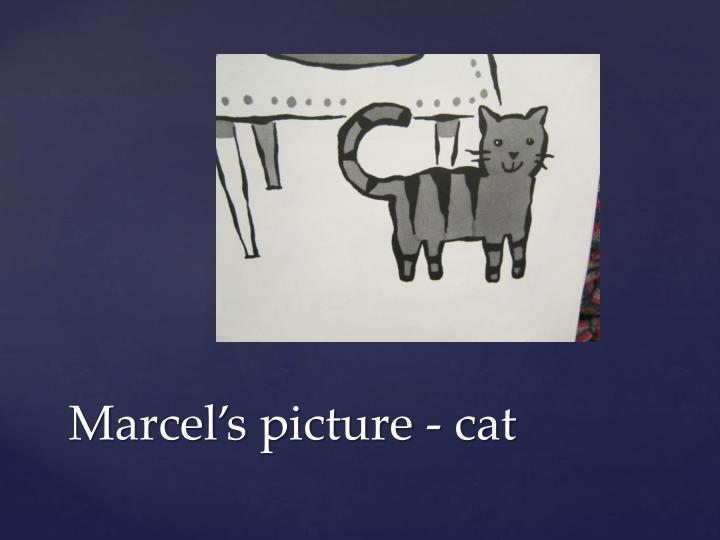 Marcel's picture - cat