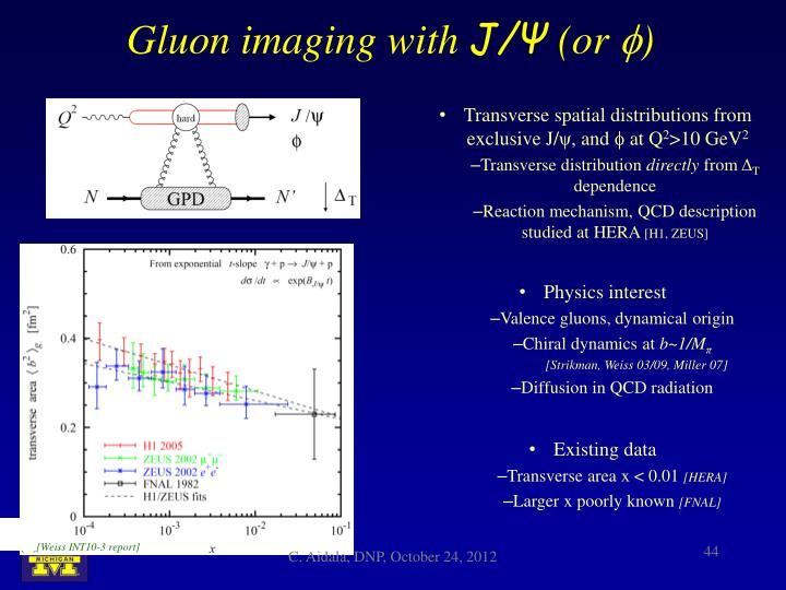 Gluon imaging with