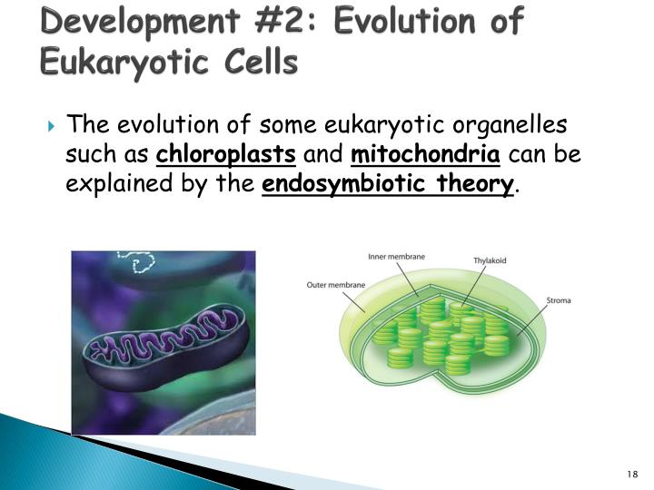 Development #2: Evolution of Eukaryotic Cells