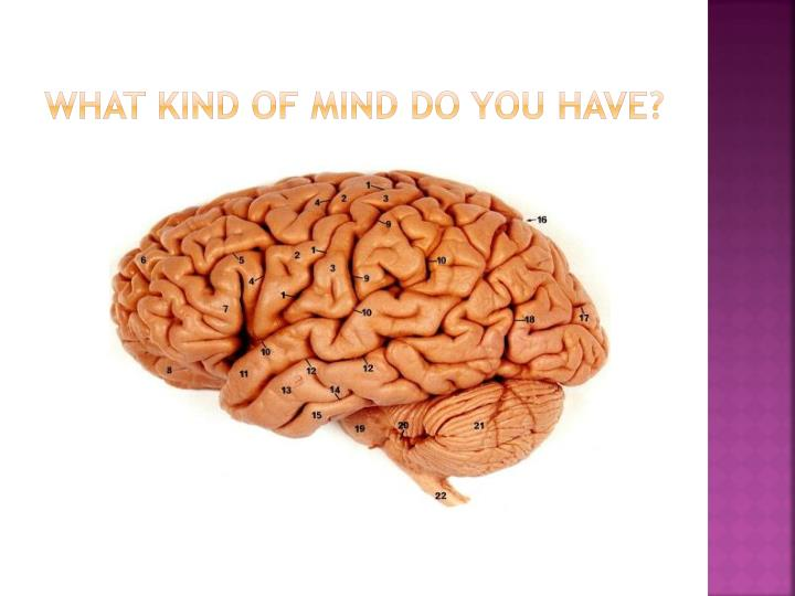 WHAT KIND OF MIND DO YOU HAVE?