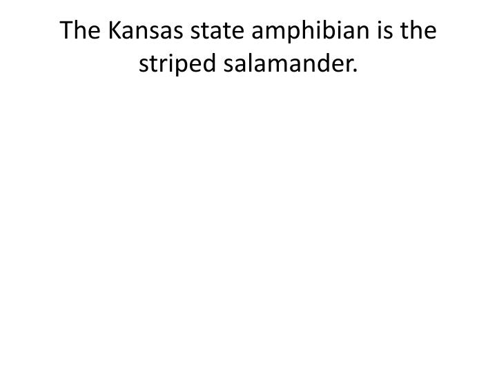 The Kansas state amphibian is