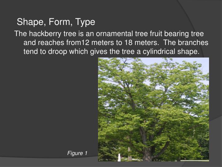 Shape, Form, Type