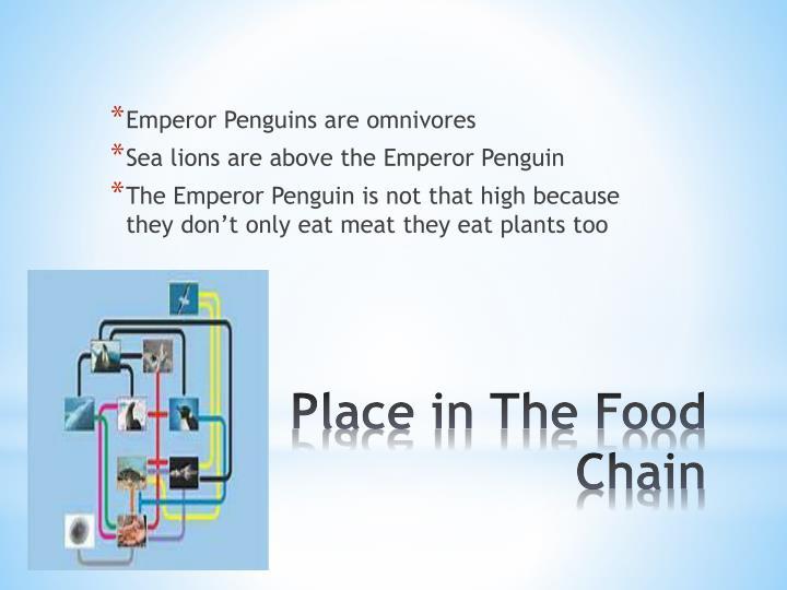 Emperor Penguins are omnivores