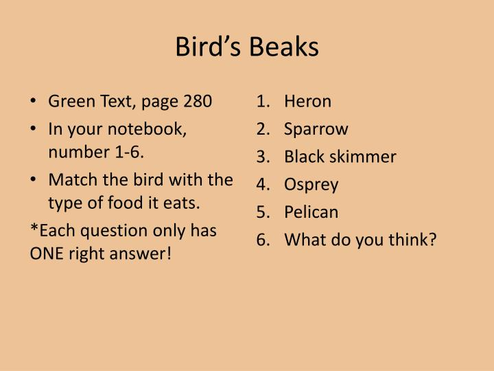 Bird s beaks