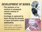 development of bones