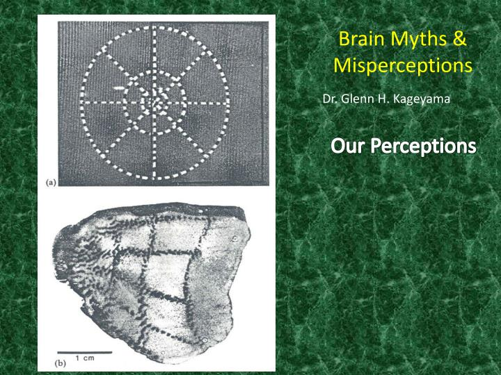 Brain Myths & Misperceptions