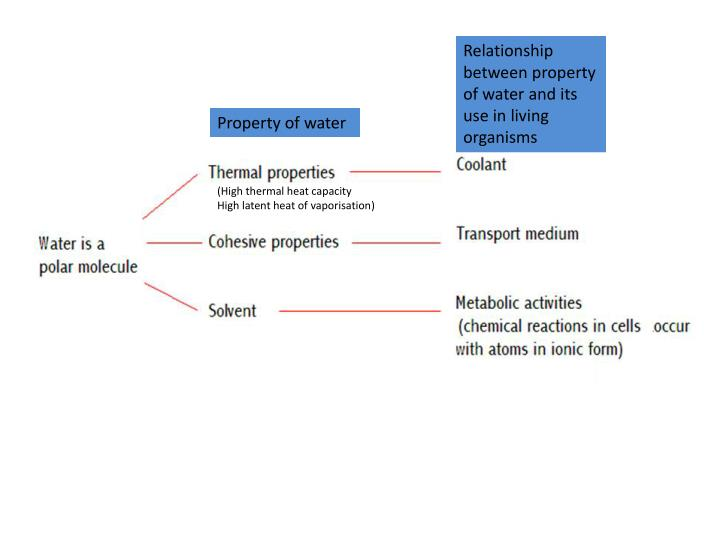 Relationship between property of water and its use in living organisms