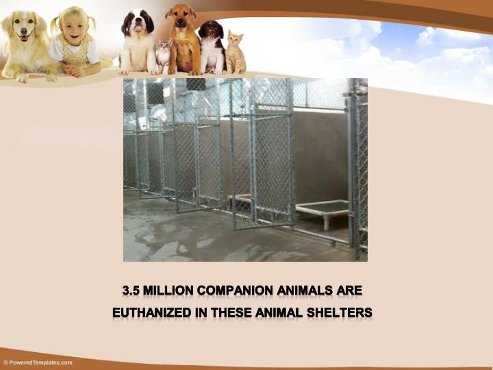 3.5 Million companion animals are Euthanized in these animal shelters
