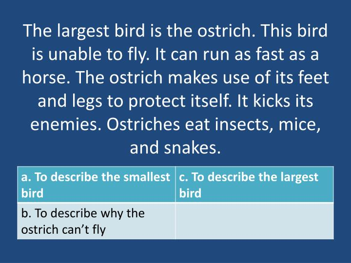 The largest bird is the ostrich. This bird is unable to fly. It can run as fast as a horse. The ostrich makes use of its feet and legs to protect itself. It kicks its enemies. Ostriches eat insects, mice, and snakes.