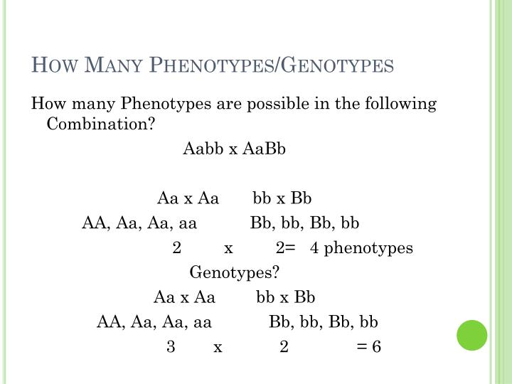 How Many Phenotypes/Genotypes