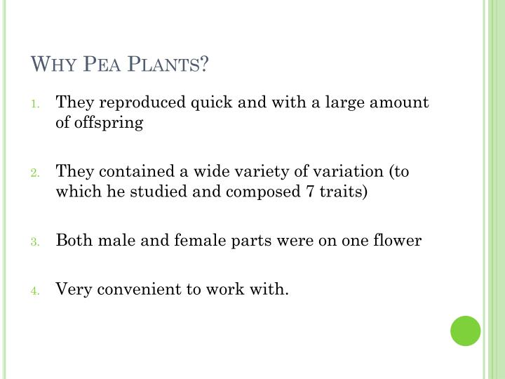 Why Pea Plants?