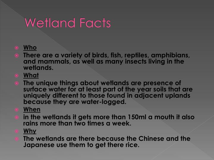 Wetland Facts