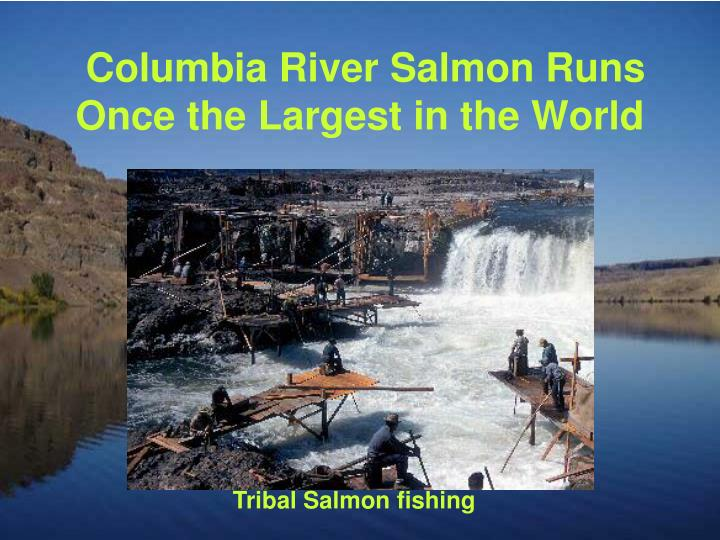 Columbia River Salmon Runs Once the Largest in the World