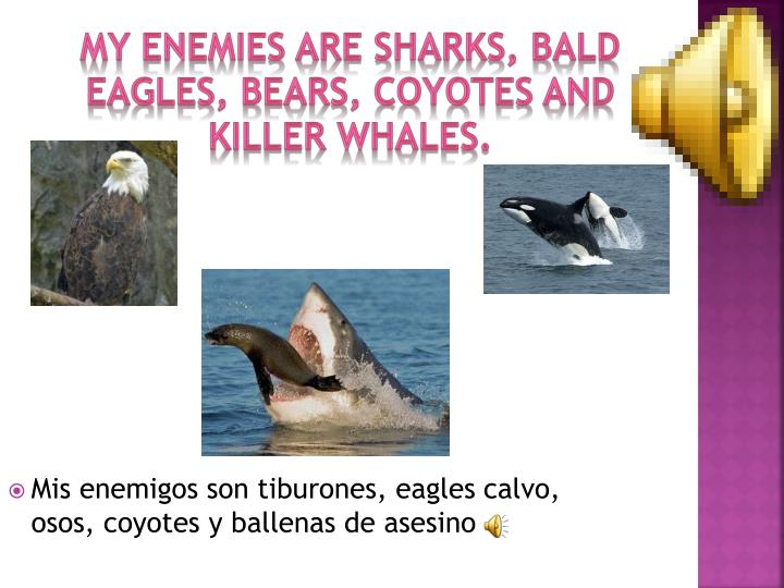 My enemies are Sharks, Bald Eagles, Bears, Coyotes and Killer Whales.