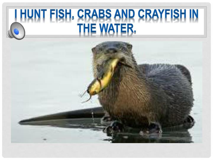 I hunt fish, crabs and crayfish in the water.
