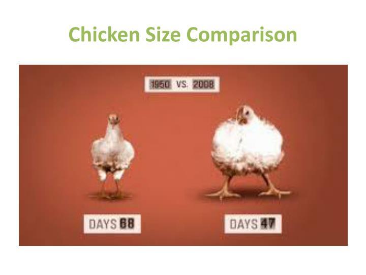 Chicken Size Comparison