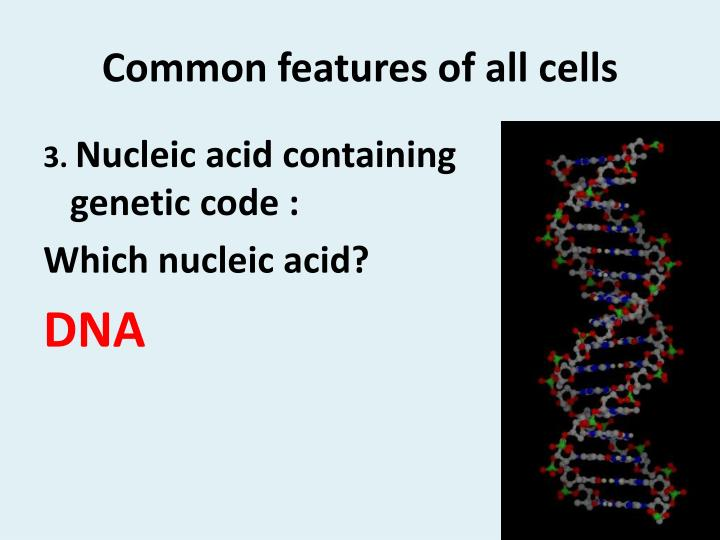 Common features of all cells