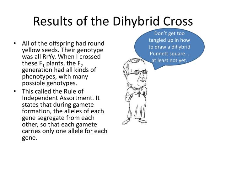 Results of the Dihybrid Cross