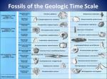 fossils of the geologic time scale