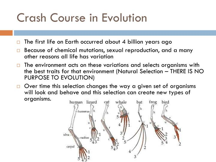 Crash Course in Evolution