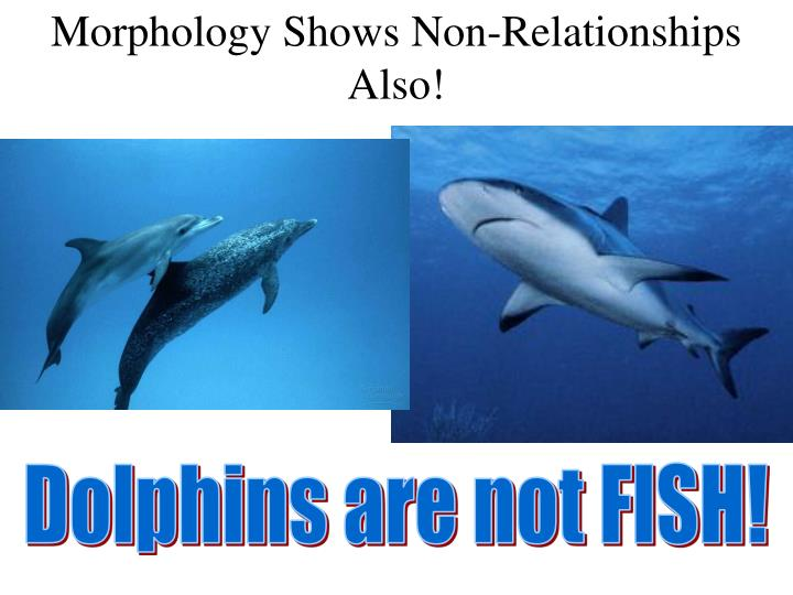 Morphology shows non relationships also