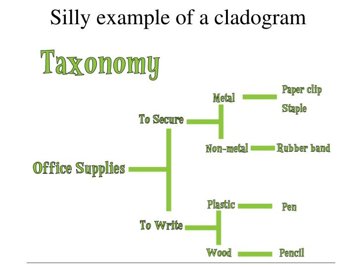Silly example of a cladogram